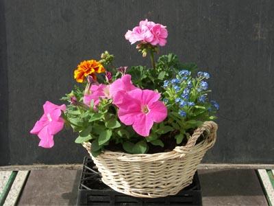 Composition jardinerie taberner fleurs pr s de salon de - Jardinerie salon de provence ...