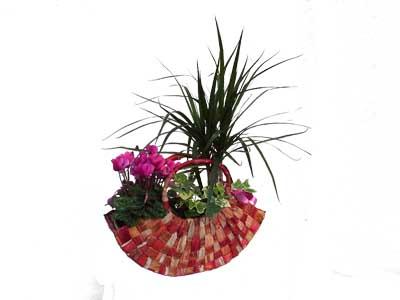 Composition plantes vertes jardinerie taberner fleurs for Jardinerie salon de provence