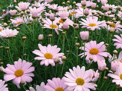 Jardinerie taberner fleurs p pini re pr s de salon de for Jardinerie salon de provence