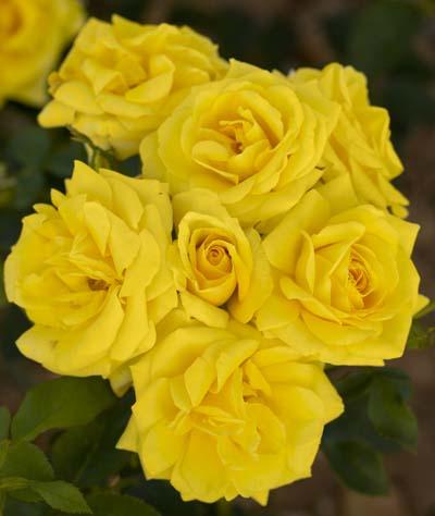 Carte d 39 or r meidresia jardinerie taberner fleurs pr s for Jardinerie salon de provence