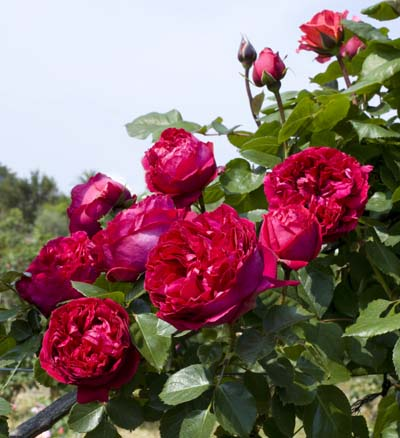 Gpt eric tabarly r meidrason jardinerie taberner fleurs for Jardinerie salon de provence