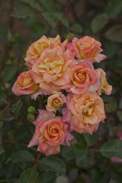 Michel serault r meipicoty jardinerie taberner fleurs - Jardinerie salon de provence ...