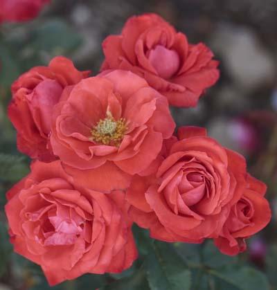 Orange symphonie r meininrut jardinerie taberner fleurs for Jardinerie salon de provence