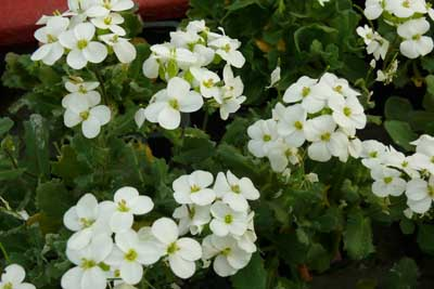 Arabette jardinerie taberner fleurs pr s de salon de for Jardinerie salon de provence